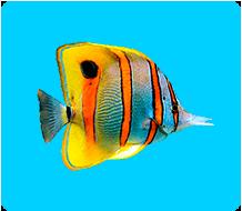 Tovary dlya ryb